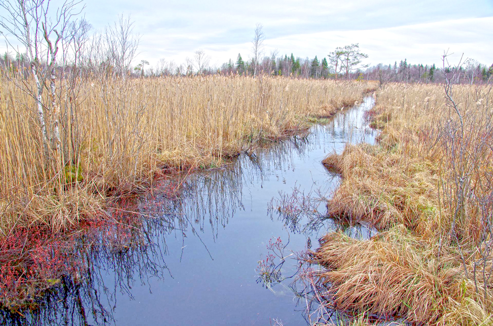 Large ditch crossing fen area in Estonia