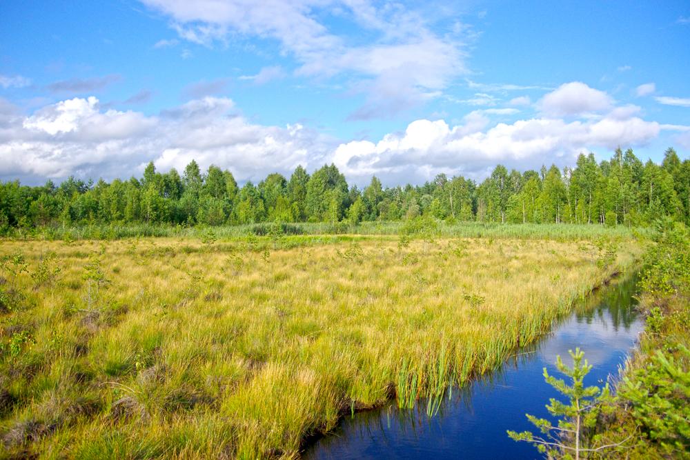 Puscia peatland