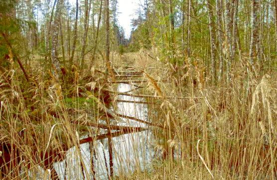Grāvis dabas lieguma teritorijā