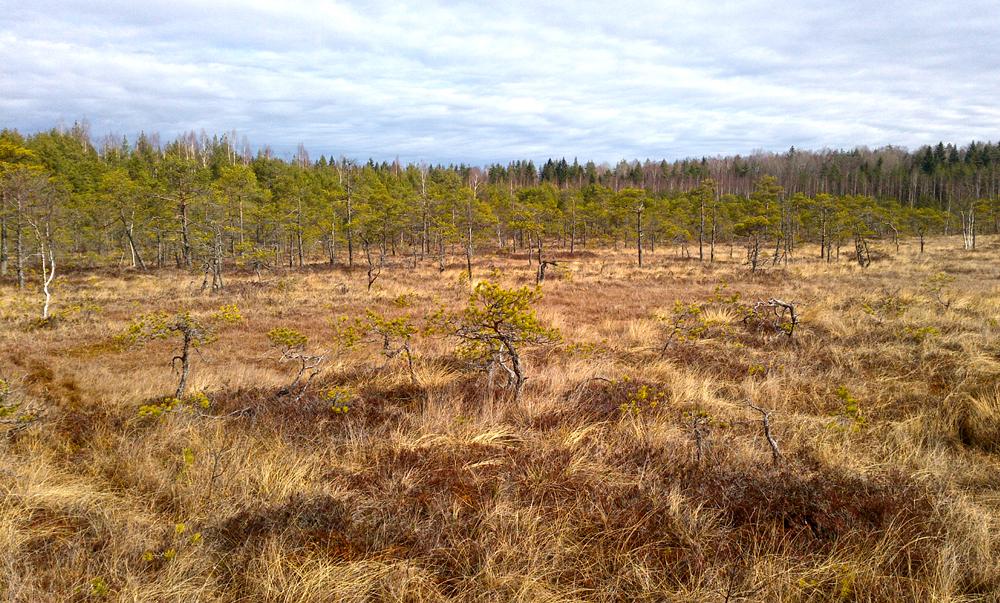 Lebendes Hochmoor im Augstroze Schutzgebiet