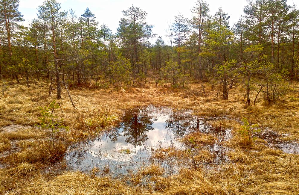 Baltezers Moor Schutzgebiet Lettland