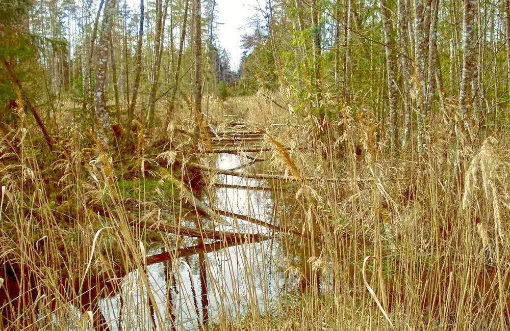 Entwässerungsgraben im Baltezers Moor Schutzgebiet