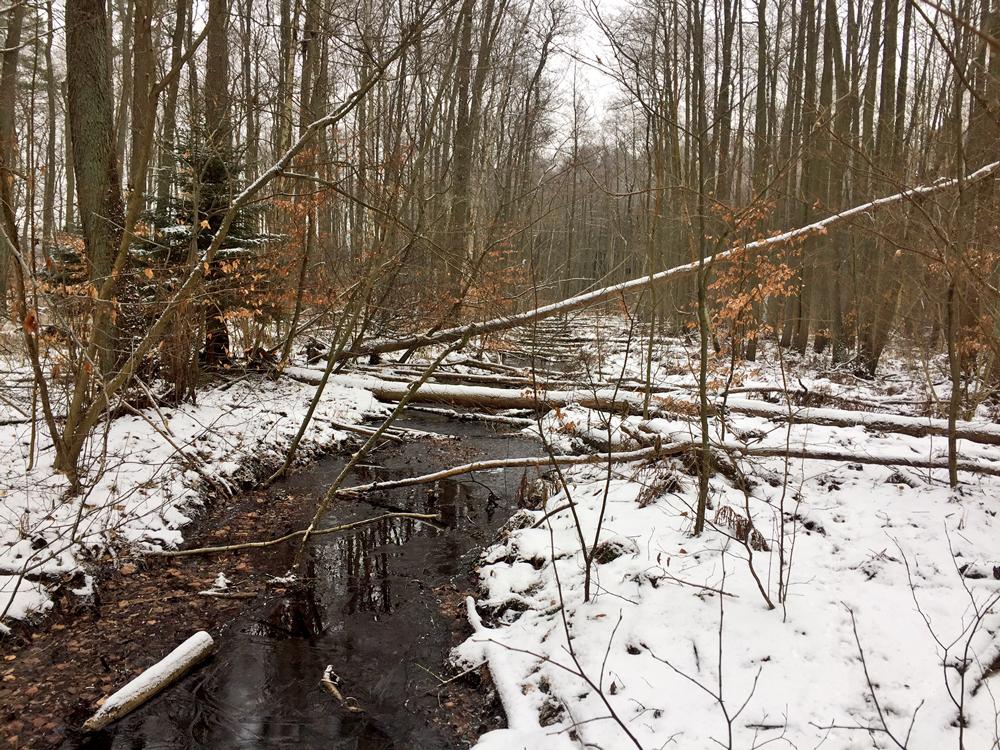Der Moorwald wird durch den Graben entwässert.
