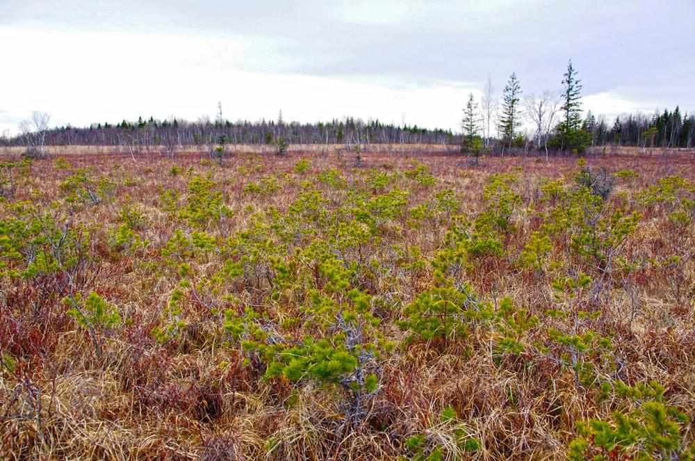 Offenes Niedermoor mit mäßiger Entwässerung