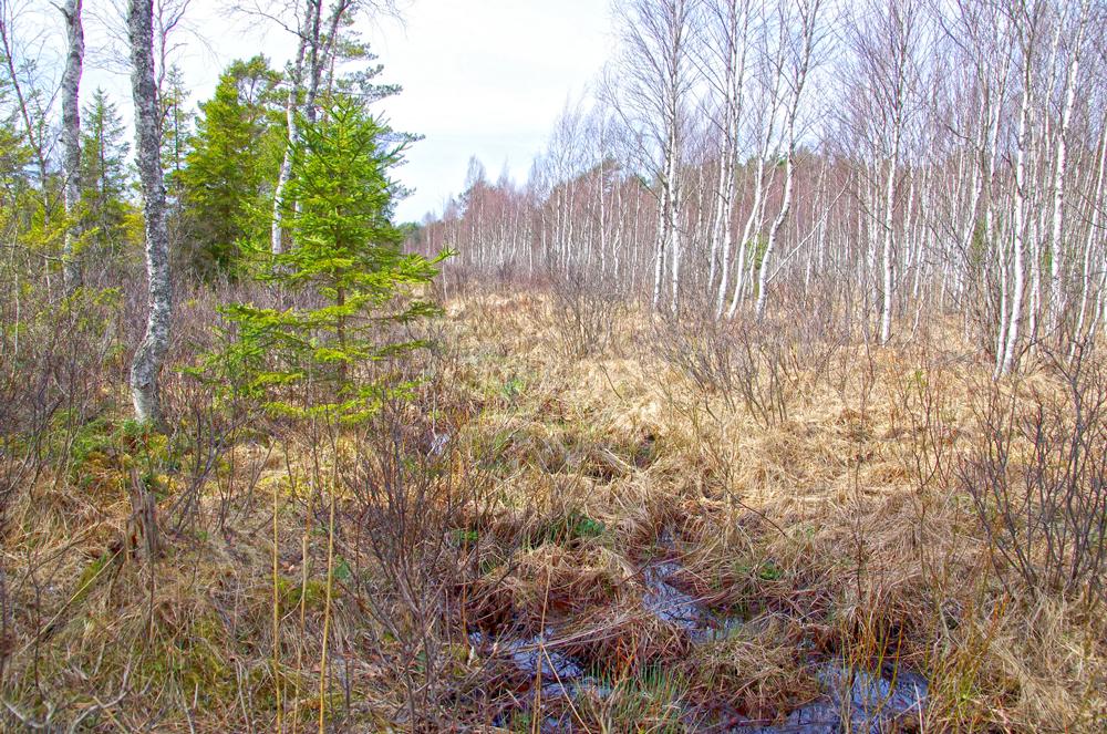 Estland Niedermoor